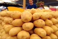 Türkiye'nin önde gelen patates üretim merkezlerinden İzmir'in Ödemiş ilçesinde erkenci patateste gör
